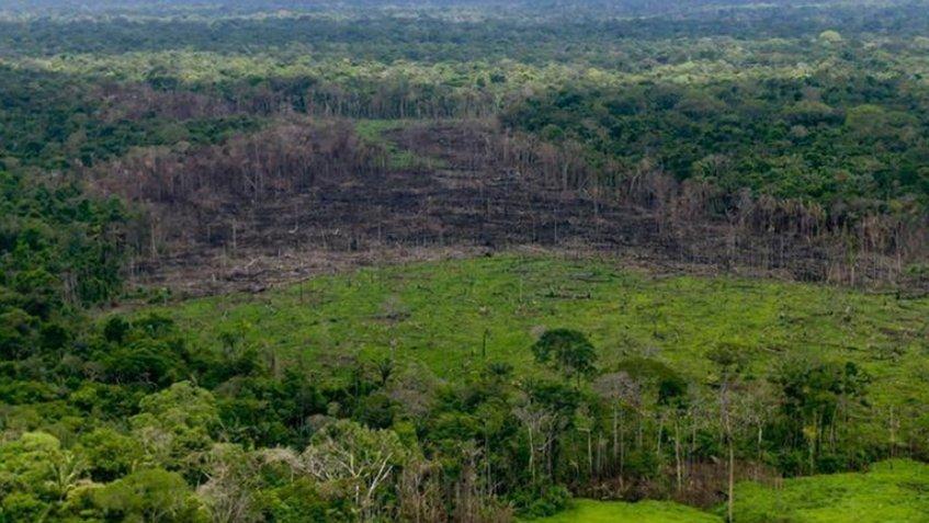 Colombia: Deforestación en 2019 alcanzó 158.000 hectáreas de bosques