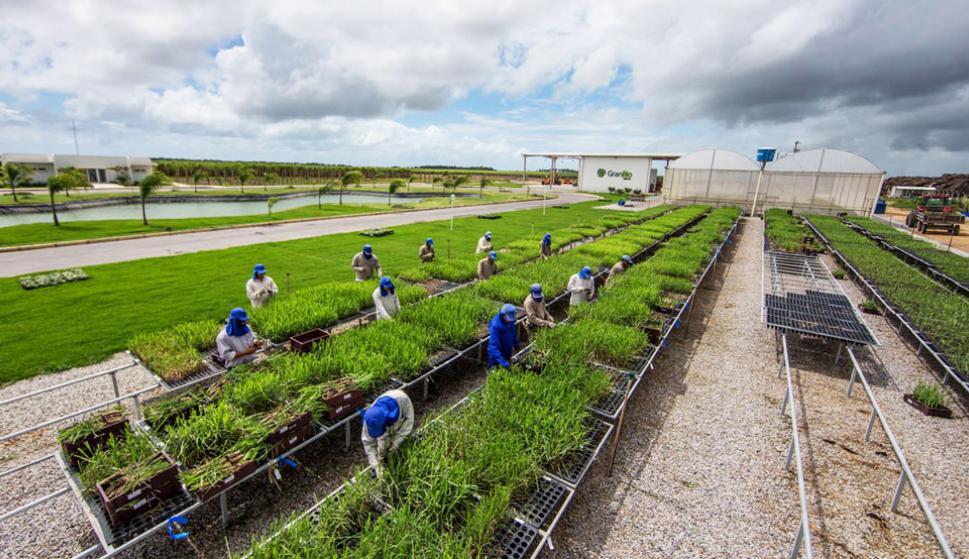Producción de azúcar en Brasil aumentó 23% en un año