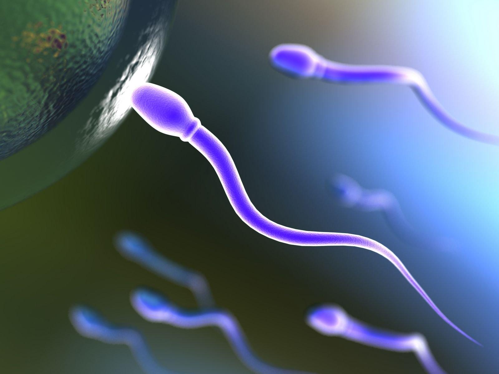 ¡No como se pensaba! Espermatozoides de personas se mueven con la cola torcida