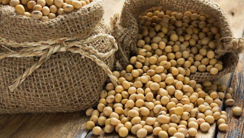 Importaciones de soja en Europa y Gran Bretaña caen 6% en agosto