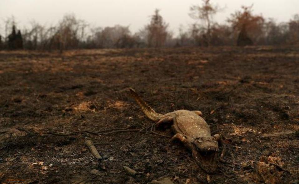 Bolsonaro desestima daños de incendios en humedales de la Amazonía