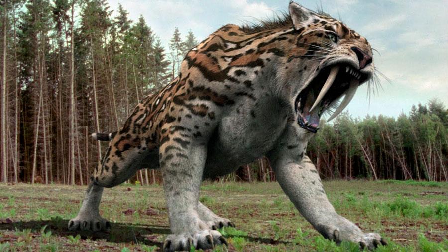 ¿Sabías Qué? El extinto tigre con dientes de sable era muy audaz en carreras largas