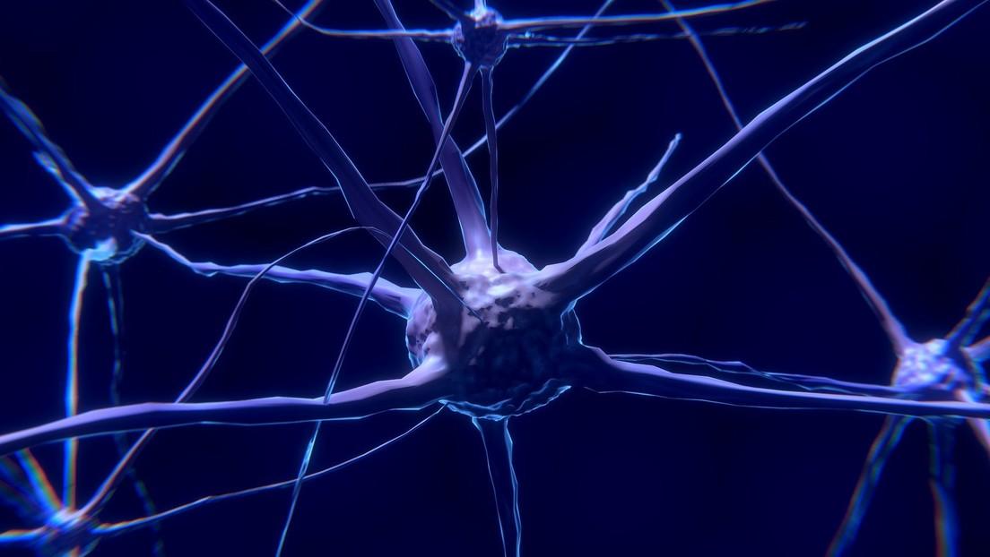 """Confirman que el cerebro de los hombres es más """"variable"""" que el de las mujeres"""