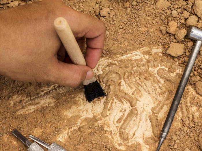 Encontraron esqueleto de un mamífero en Argentina que se extinguió hace 8.000 años
