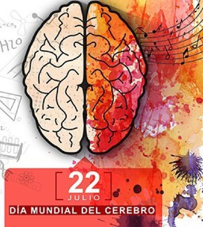 Este 22 de julio se celebra el Día Mundial del Cerebro - Primicias 24